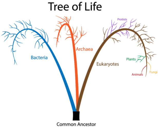 Domains in Tree of Life