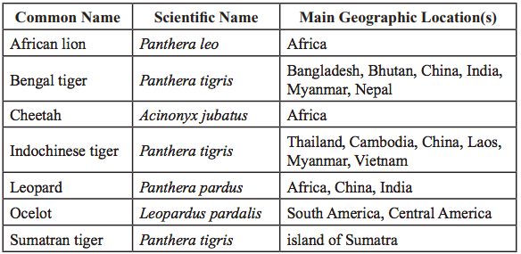 Panthera Feline classification